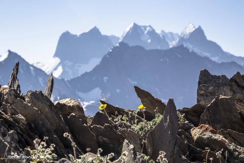 Вершины Туркестанского хребта